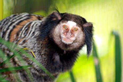 Monkeys for Sale | Tropical Rainforest Preserve
