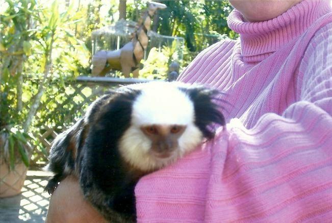 Monkeys for Sale   Monkeys for Sale @ Tropical Rainforest